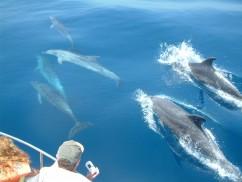 El turismo de avistamiento de cetáceos en la Costa Tropical